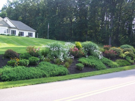 Landscaping Design for a Bank | See Photos